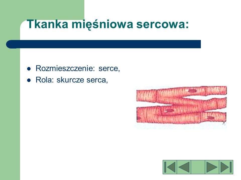 Tkanka mięśniowa gładka: Rozmieszczenie: narządy trawienne, naczynia krwionośne.