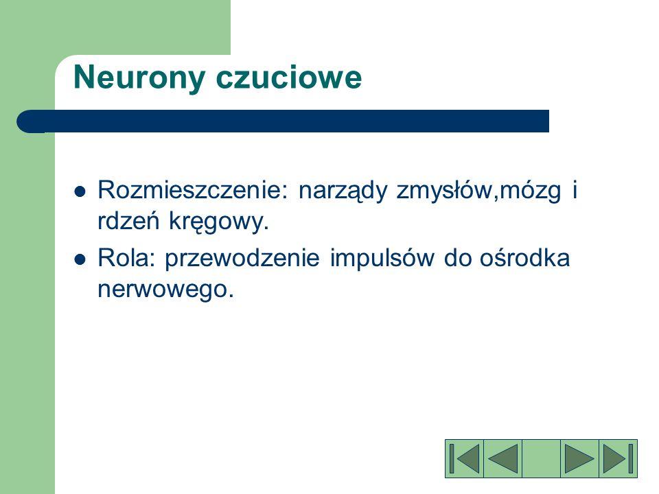 Tkanka nerwowa Neurony czuciowe Neurony ruchowe Neurony pośredniczące Neurony glejowe