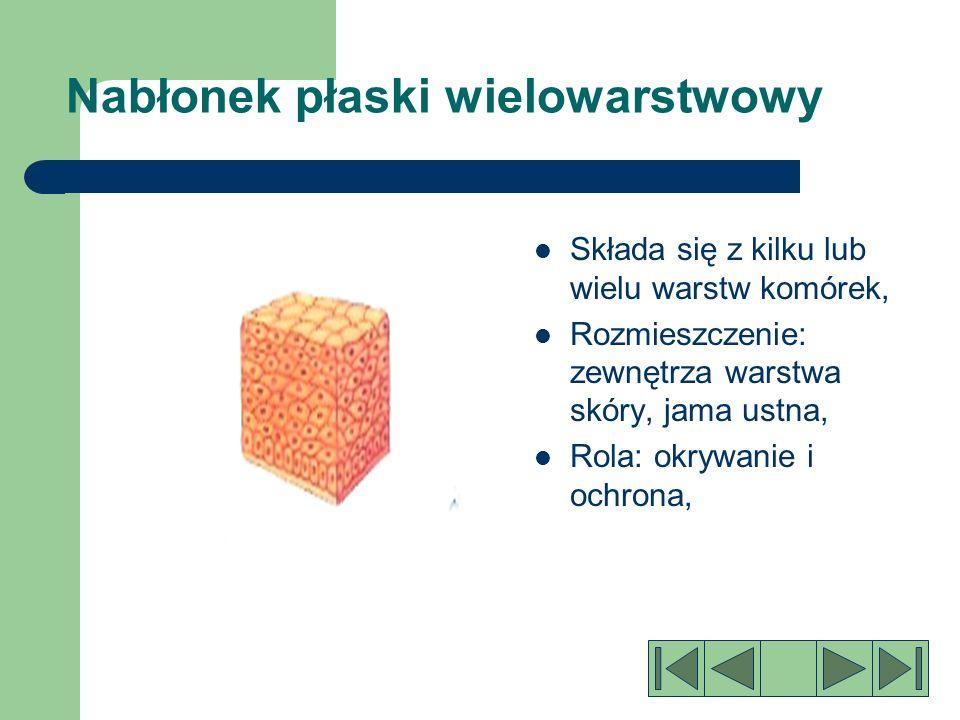 Nabłonek płaski jednowarstwowy: Jest utworzony z pojedynczej warstwy szerokich i płaskich komórek, Wyściela naczynia krwionośne i pęcherzyki płucne, Rola:wyścielanie ochrona przepuszczanie niektórych substancji w wyniku dyfuzji,