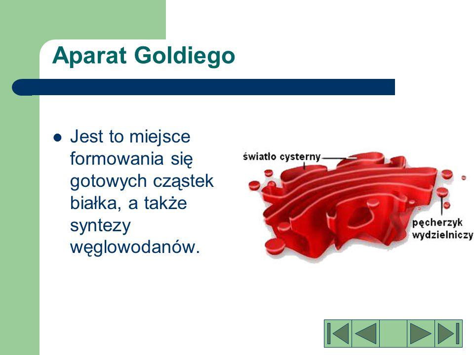 Cytoplazma Galaretowata koloidalna substancja wypełniająca komórkę.