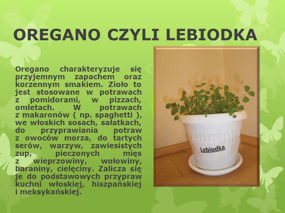 OREGANO CZYLI LEBIODKA Oregano charakteryzuje się przyjemnym zapachem oraz korzennym smakiem. Zioło to jest stosowane w potrawach z pomidorami, w pizz