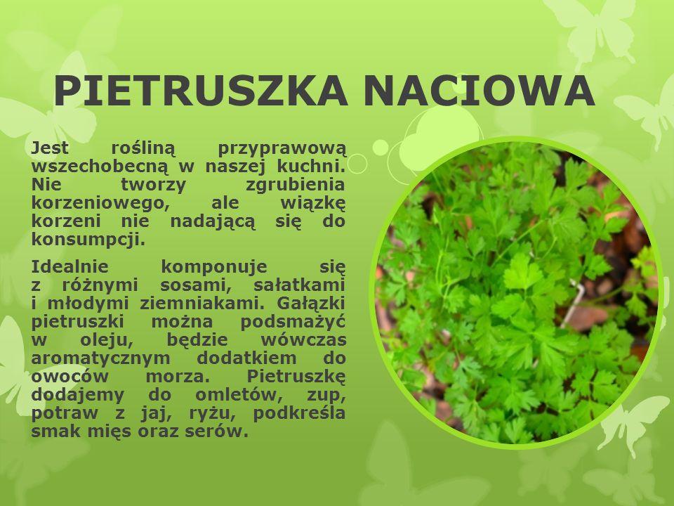 PIETRUSZKA NACIOWA Jest rośliną przyprawową wszechobecną w naszej kuchni. Nie tworzy zgrubienia korzeniowego, ale wiązkę korzeni nie nadającą się do k