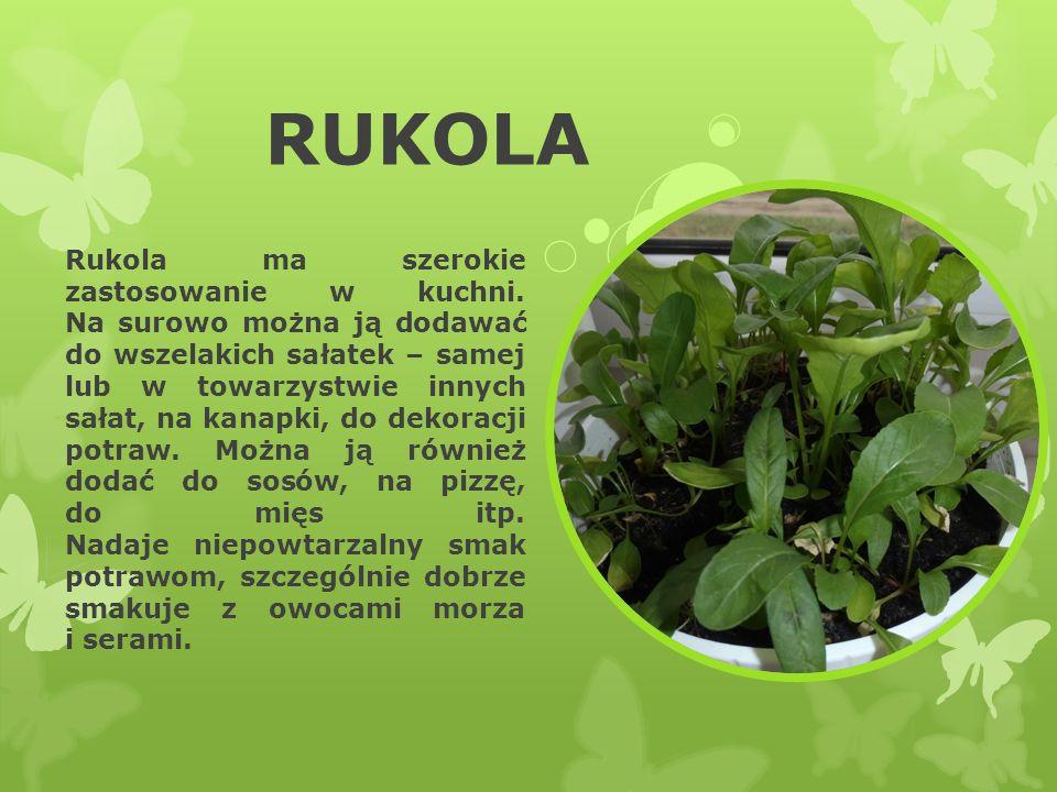 RUKOLA Rukola ma szerokie zastosowanie w kuchni. Na surowo można ją dodawać do wszelakich sałatek – samej lub w towarzystwie innych sałat, na kanapki,