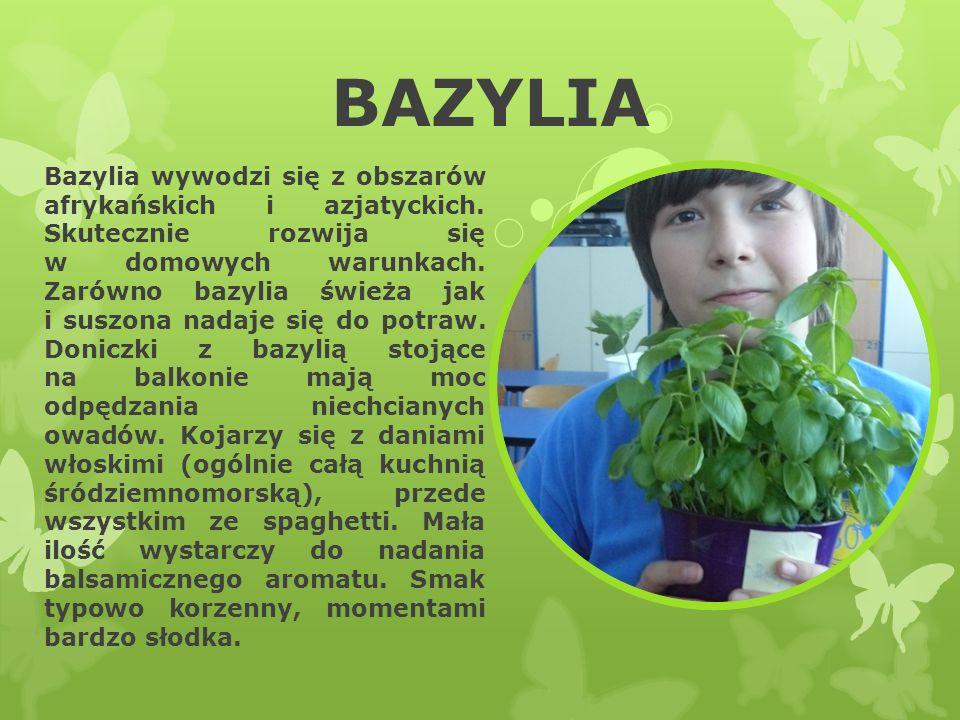 BAZYLIA Bazylia wywodzi się z obszarów afrykańskich i azjatyckich. Skutecznie rozwija się w domowych warunkach. Zarówno bazylia świeża jak i suszona n