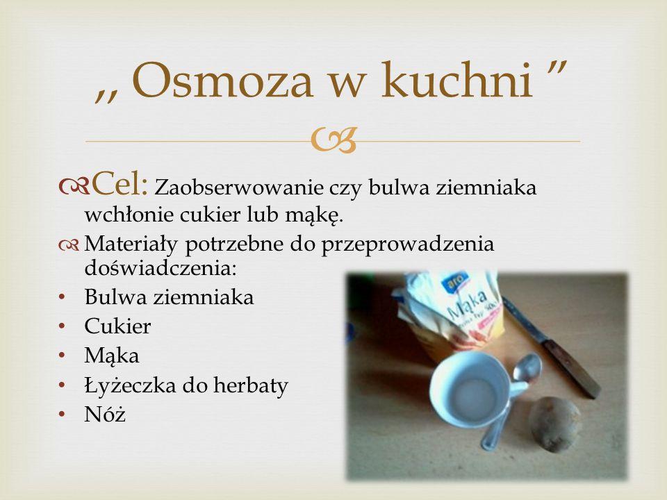 Cel: Zaobserwowanie czy bulwa ziemniaka wchłonie cukier lub mąkę. Materiały potrzebne do przeprowadzenia doświadczenia: Bulwa ziemniaka Cukier Mąka Ły