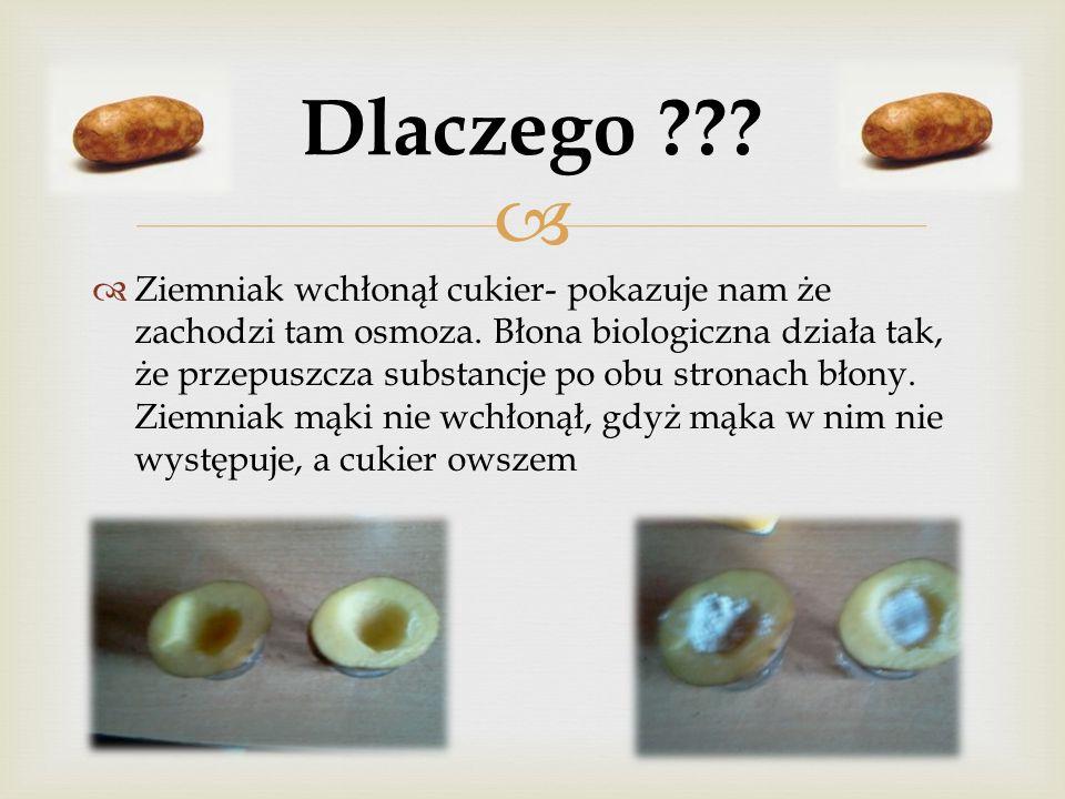 Ziemniak wchłonął cukier- pokazuje nam że zachodzi tam osmoza. Błona biologiczna działa tak, że przepuszcza substancje po obu stronach błony. Ziemniak