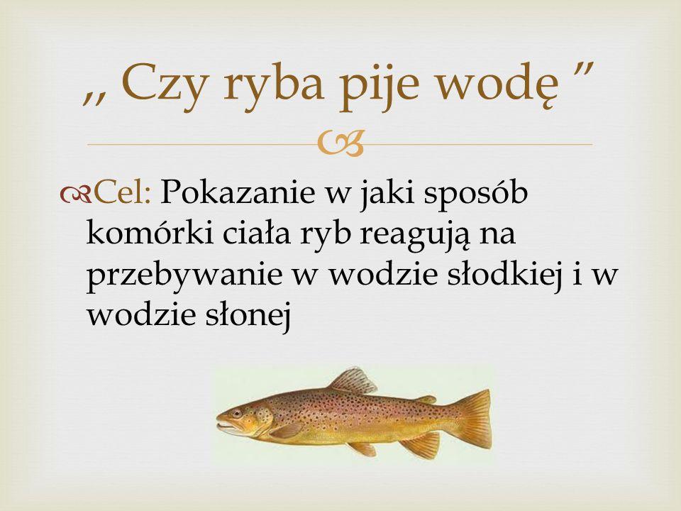 Cel: Pokazanie w jaki sposób komórki ciała ryb reagują na przebywanie w wodzie słodkiej i w wodzie słonej,, Czy ryba pije wodę