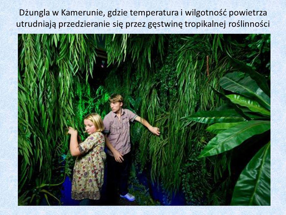 wszystkie fotografie włączone do tej prezentacji pochodzą ze strony Muzeum Klimahaus: http://klimahaus-bremerhaven.eu/exhibition-gallery autorzy prezentacji: Konrad Skalski i Maciej Rzońca kl.