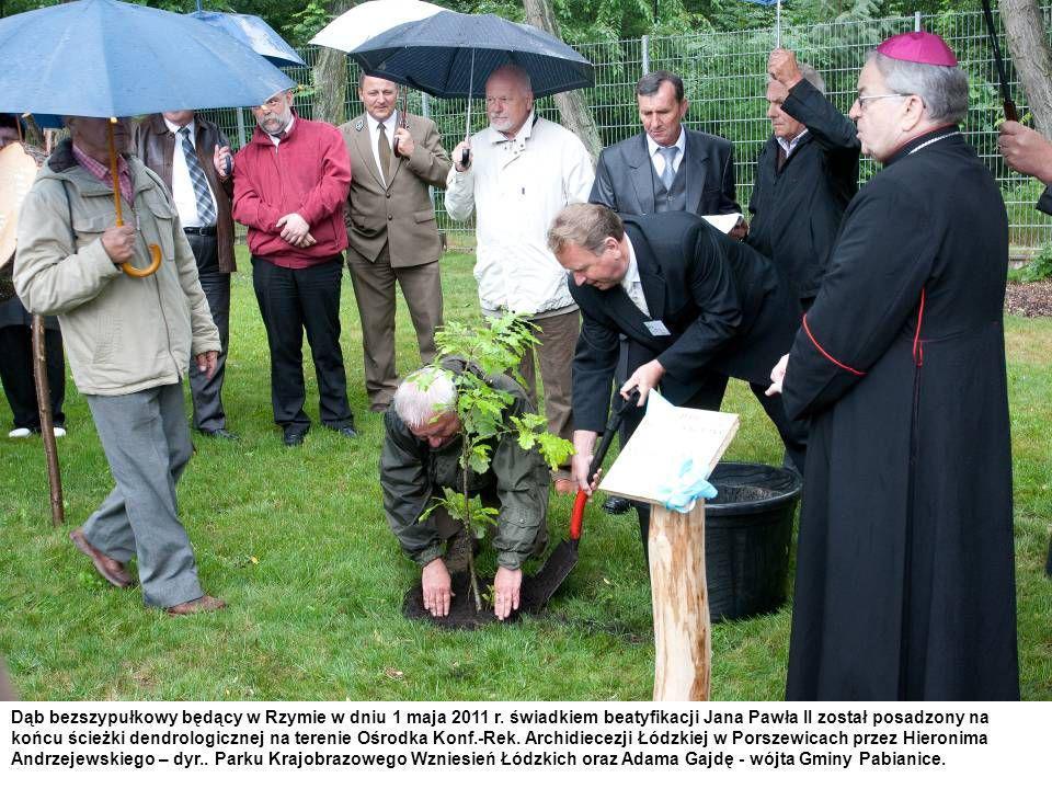Dąb bezszypułkowy będący w Rzymie w dniu 1 maja 2011 r. świadkiem beatyfikacji Jana Pawła II został posadzony na końcu ścieżki dendrologicznej na tere
