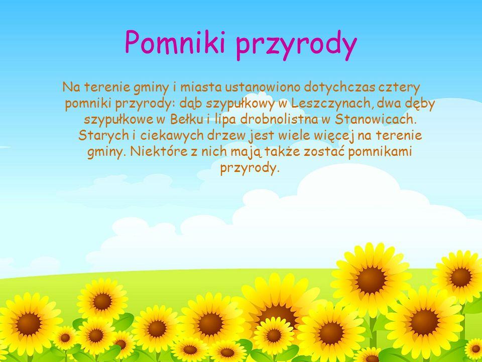 Pomniki przyrody Na terenie gminy i miasta ustanowiono dotychczas cztery pomniki przyrody: dąb szypułkowy w Leszczynach, dwa dęby szypułkowe w Bełku i lipa drobnolistna w Stanowicach.