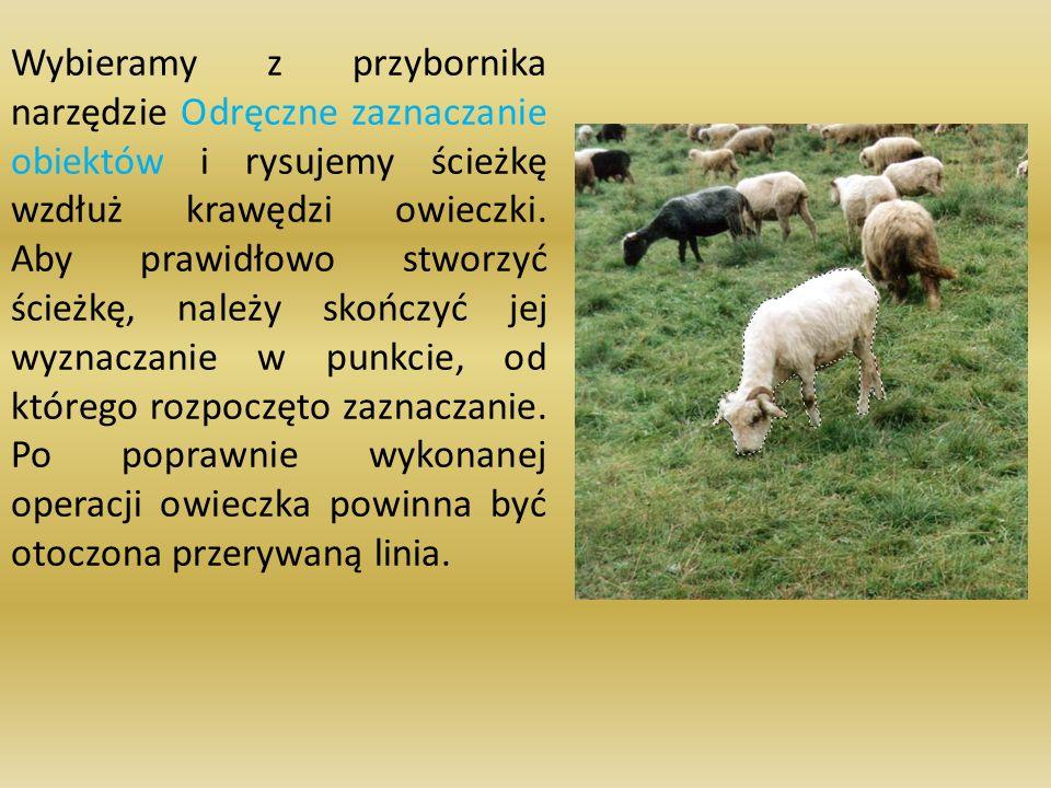 Wybieramy z przybornika narzędzie Odręczne zaznaczanie obiektów i rysujemy ścieżkę wzdłuż krawędzi owieczki. Aby prawidłowo stworzyć ścieżkę, należy s