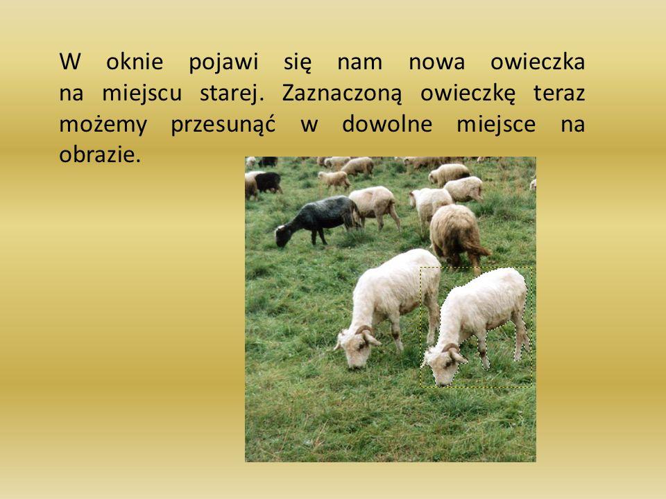 W oknie pojawi się nam nowa owieczka na miejscu starej. Zaznaczoną owieczkę teraz możemy przesunąć w dowolne miejsce na obrazie.