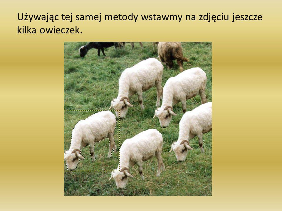 Używając tej samej metody wstawmy na zdjęciu jeszcze kilka owieczek.