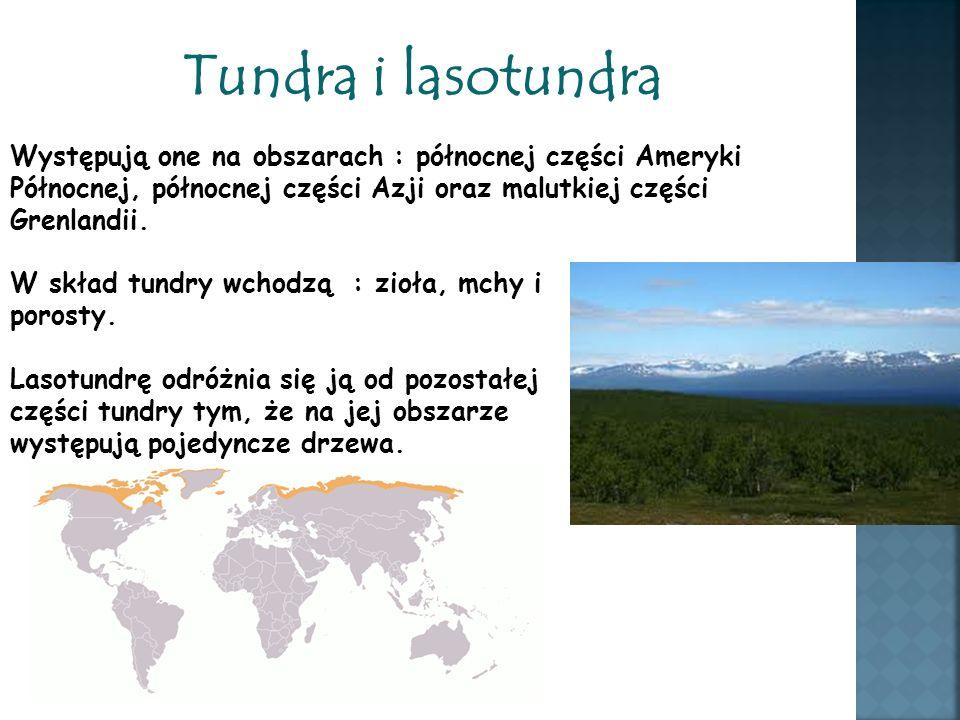 Tundra i lasotundra Występują one na obszarach : północnej części Ameryki Północnej, północnej części Azji oraz malutkiej części Grenlandii. W skład t