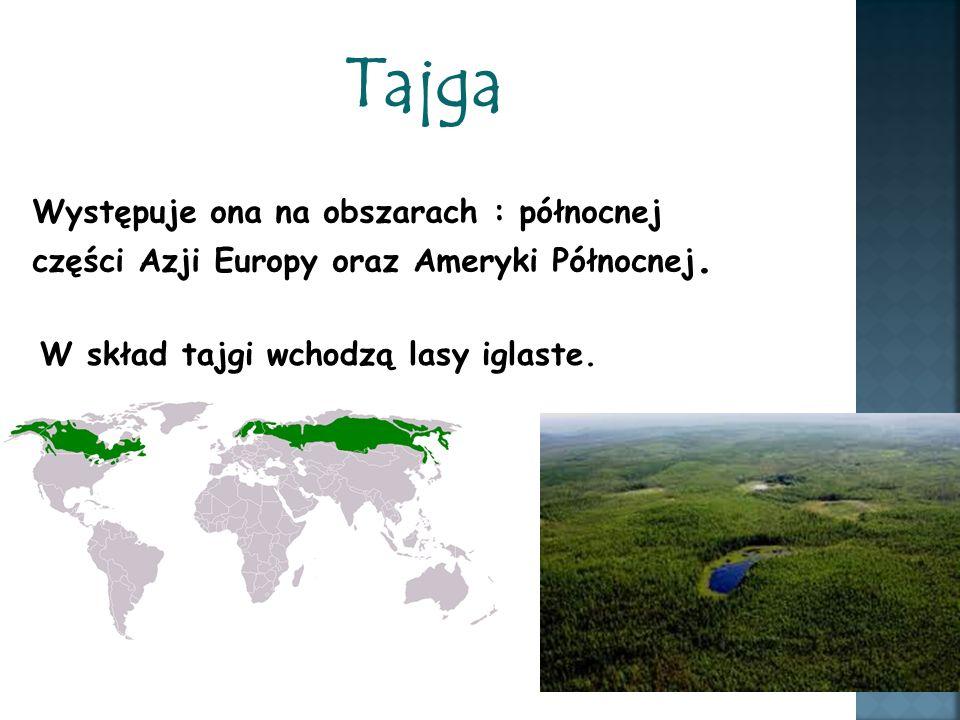 Tajga Występuje ona na obszarach : północnej części Azji Europy oraz Ameryki Północnej. W skład tajgi wchodzą lasy iglaste.