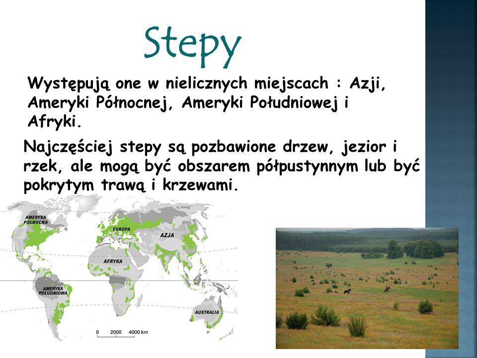 Stepy Występują one w nielicznych miejscach : Azji, Ameryki Północnej, Ameryki Południowej i Afryki. Najczęściej stepy są pozbawione drzew, jezior i r