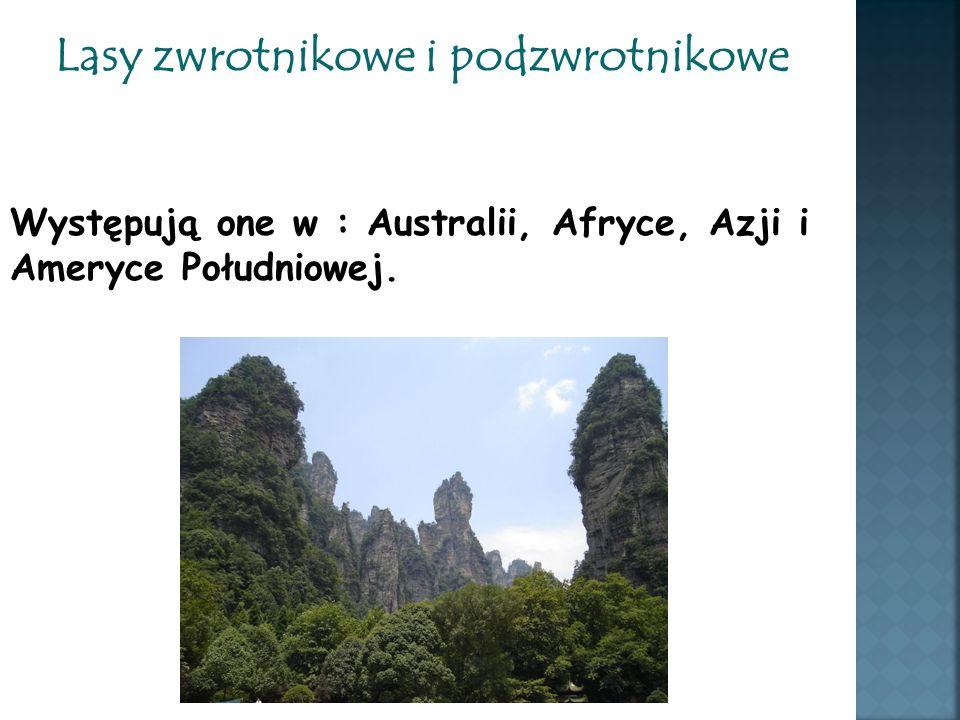 Lasy zwrotnikowe i podzwrotnikowe Występują one w : Australii, Afryce, Azji i Ameryce Południowej.
