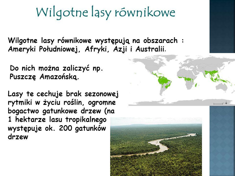 Wilgotne lasy równikowe Wilgotne lasy równikowe występują na obszarach : Ameryki Południowej, Afryki, Azji i Australii. Do nich można zaliczyć np. Pus