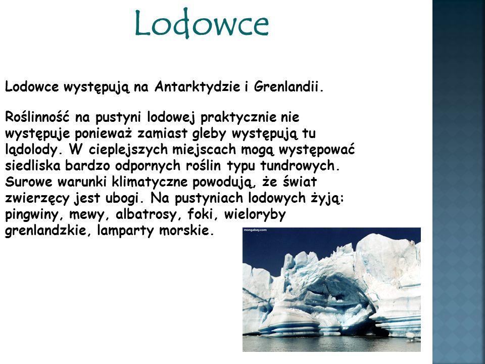 Lodowce Lodowce występują na Antarktydzie i Grenlandii. Roślinność na pustyni lodowej praktycznie nie występuje ponieważ zamiast gleby występują tu lą