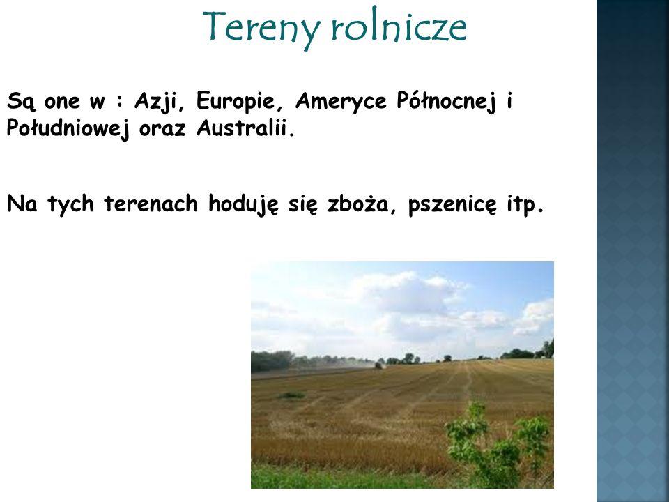 Tereny rolnicze Są one w : Azji, Europie, Ameryce Północnej i Południowej oraz Australii. Na tych terenach hoduję się zboża, pszenicę itp.