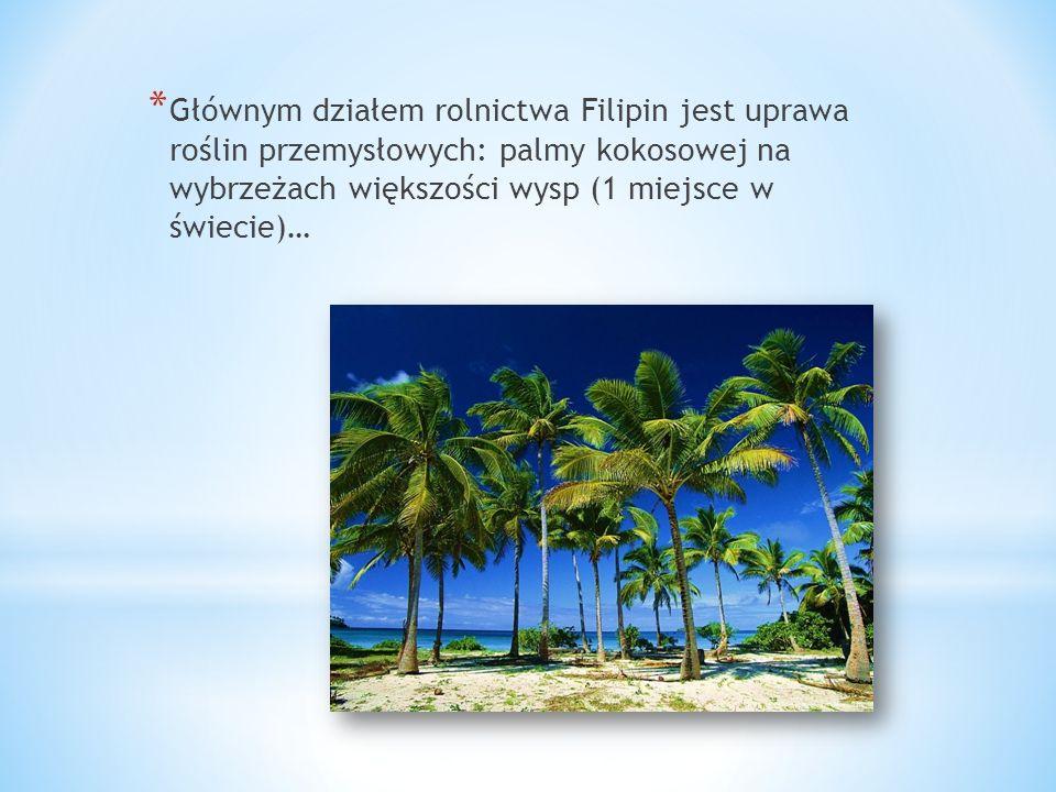 * Głównym działem rolnictwa Filipin jest uprawa roślin przemysłowych: palmy kokosowej na wybrzeżach większości wysp (1 miejsce w świecie)…