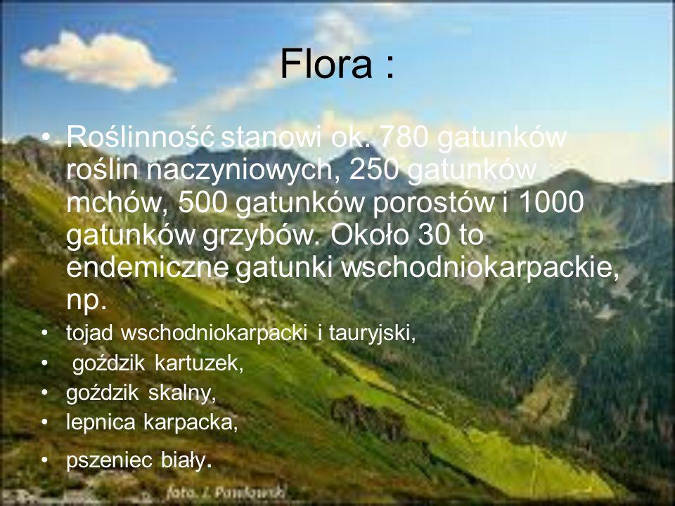 Flora : Roślinność stanowi ok. 780 gatunków roślin naczyniowych, 250 gatunków mchów, 500 gatunków porostów i 1000 gatunków grzybów. Około 30 to endemi