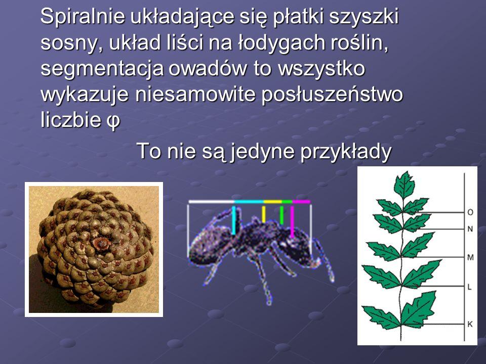 Spiralnie układające się płatki szyszki sosny, układ liści na łodygach roślin, segmentacja owadów to wszystko wykazuje niesamowite posłuszeństwo liczb