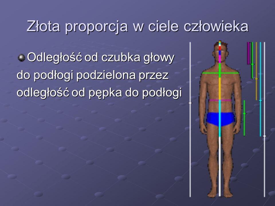 Złota proporcja w ciele człowieka Odległość od czubka głowy do podłogi podzielona przez odległość od pępka do podłogi