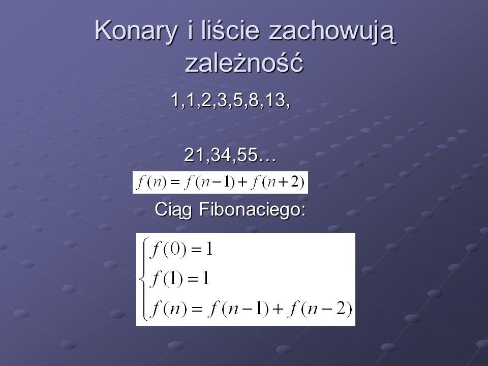 Konary i liście zachowują zależność 1,1,2,3,5,8,13,21,34,55… Ciąg Fibonaciego: