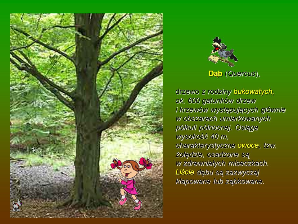 Dąb (Quercus), Dąb (Quercus), drzewo z rodziny bukowatych, ok. 600 gatunków drzew i krzewów występujących głównie w obszarach umiarkowanych półkuli pó