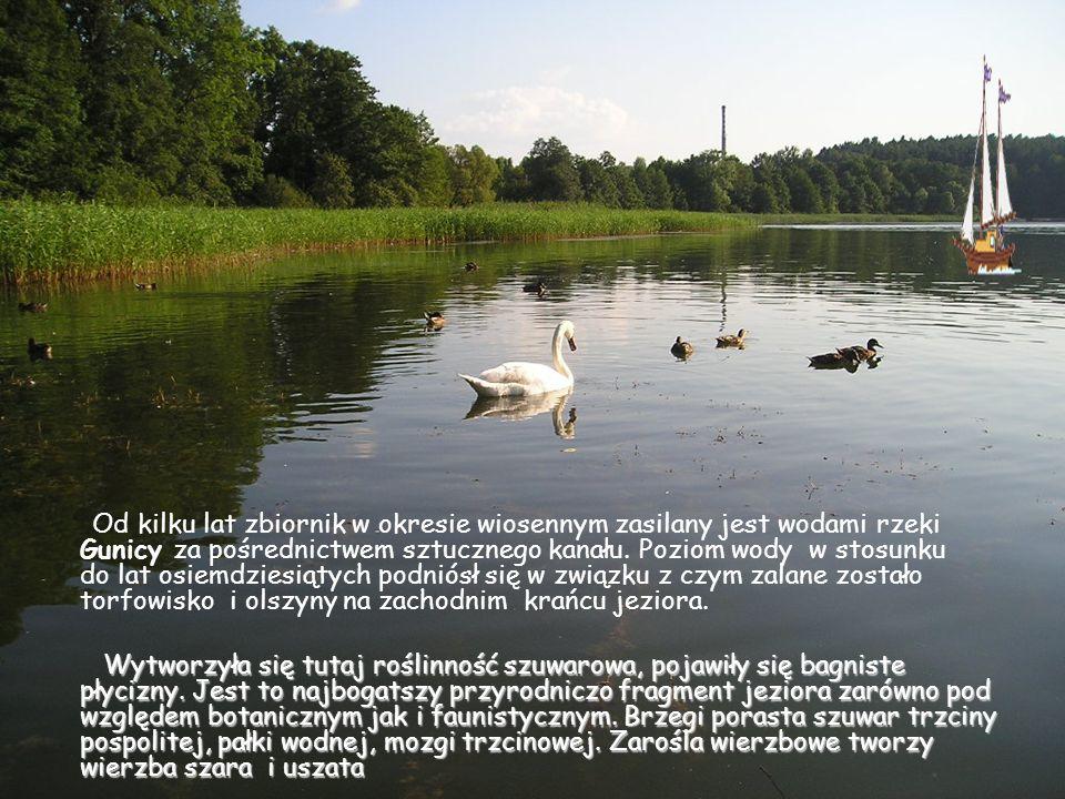 Od kilku lat zbiornik w okresie wiosennym zasilany jest wodami rzeki Gunicy za pośrednictwem sztucznego kanału. Poziom wody w stosunku do lat osiemdzi
