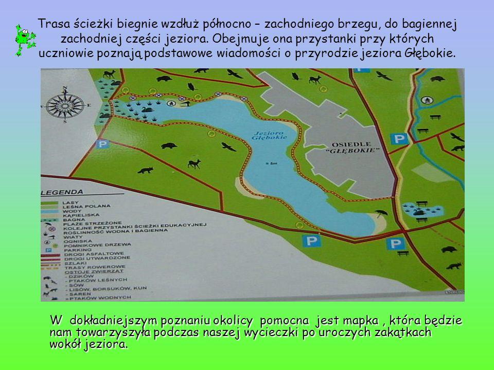 Trasa ścieżki biegnie wzdłuż północno – zachodniego brzegu, do bagiennej zachodniej części jeziora. Obejmuje ona przystanki przy których uczniowie poz