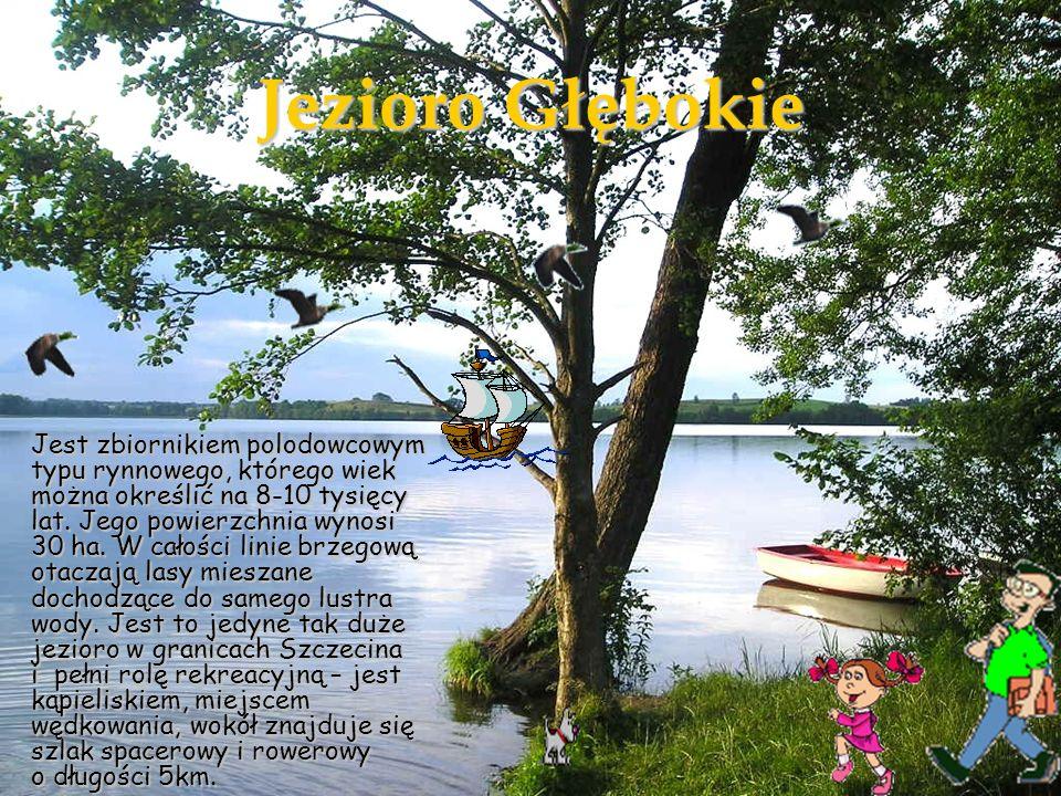 Na powierzchni jeziora pływa Rdest ziemnowodny - Polygonum amphibium L.