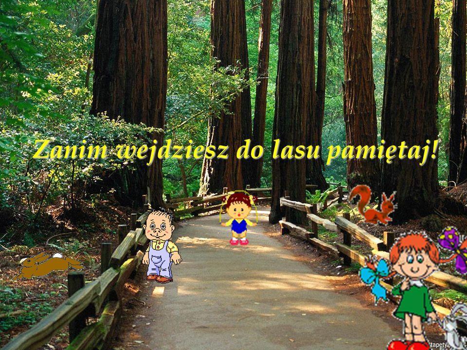 Zanim wejdziesz do lasu pamiętaj!