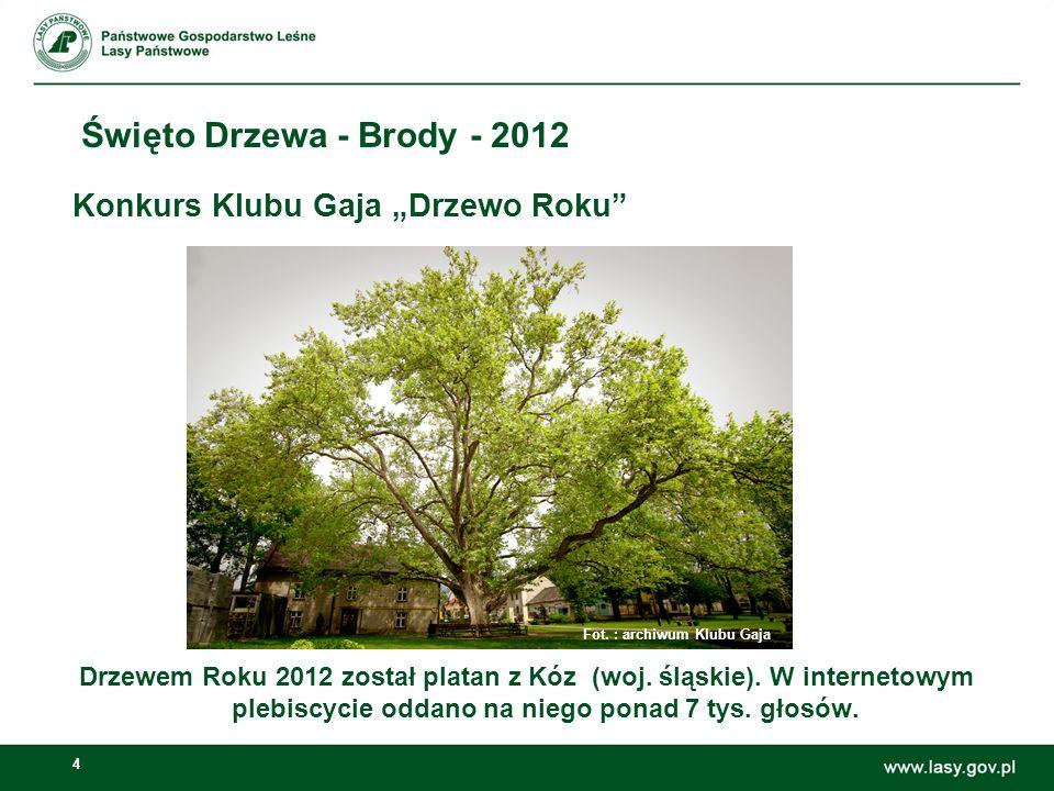 4 Święto Drzewa - Brody - 2012 Konkurs Klubu Gaja Drzewo Roku Drzewem Roku 2012 został platan z Kóz (woj. śląskie). W internetowym plebiscycie oddano