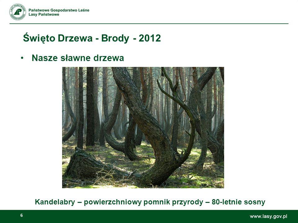 6 Święto Drzewa - Brody - 2012 Kandelabry – powierzchniowy pomnik przyrody – 80-letnie sosny Nasze sławne drzewa 65,66%