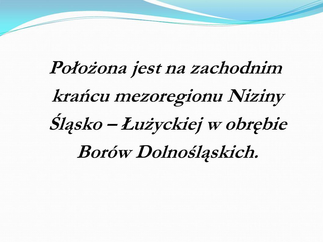 Położona jest na zachodnim krańcu mezoregionu Niziny Śląsko – Łużyckiej w obrębie Borów Dolnośląskich.