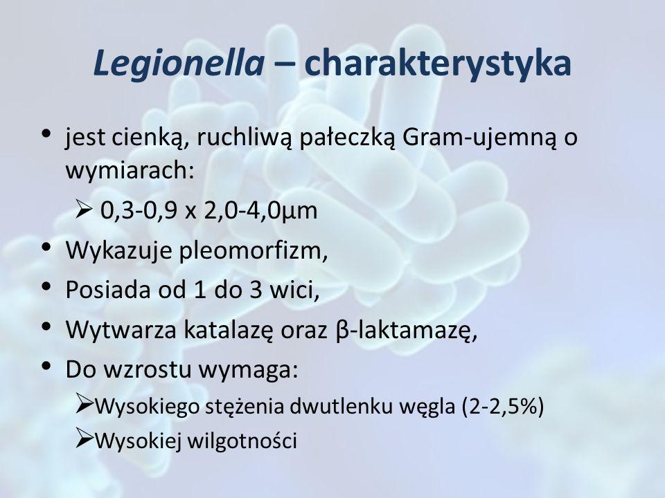 Legionella – charakterystyka jest cienką, ruchliwą pałeczką Gram-ujemną o wymiarach: 0,3-0,9 x 2,0-4,0µm Wykazuje pleomorfizm, Posiada od 1 do 3 wici,