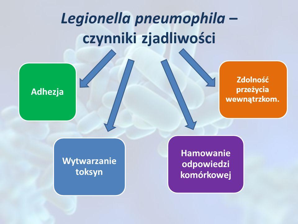 Legionella pneumophila – czynniki zjadliwości Adhezja Zdolność przeżycia wewnątrzkom. Wytwarzanie toksyn Hamowanie odpowiedzi komórkowej