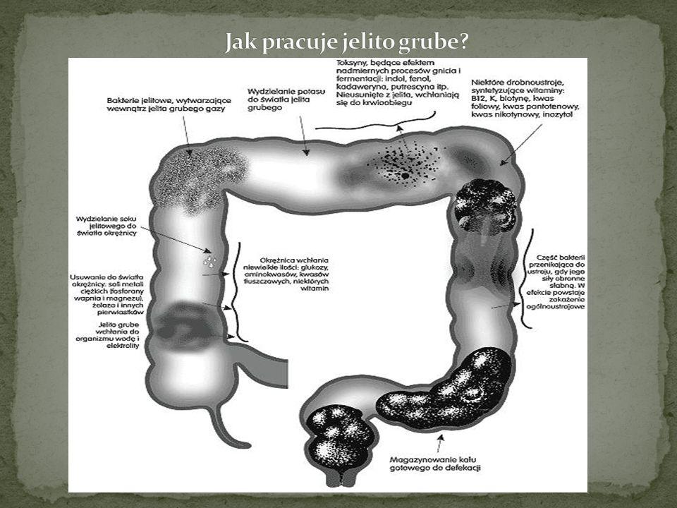 Etiologia i patogeneza Przyczyny powstawania raka jelita grubego nie zostały dotychczas poznane.