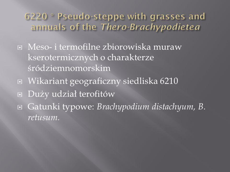 Meso- i termofilne zbiorowiska muraw kserotermicznych o charakterze śródziemnomorskim Wikariant geograficzny siedliska 6210 Duży udział terofitów Gatu