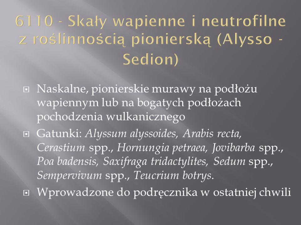 Naskalne, pionierskie murawy na podłożu wapiennym lub na bogatych podłożach pochodzenia wulkanicznego Gatunki: Alyssum alyssoides, Arabis recta, Ceras