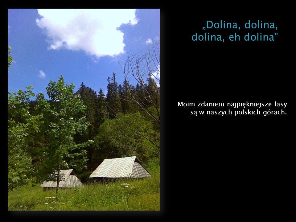 Moim zdaniem najpiękniejsze lasy są w naszych polskich górach.