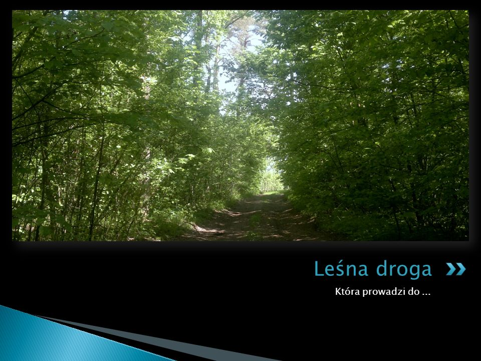 Która prowadzi do... Leśna droga