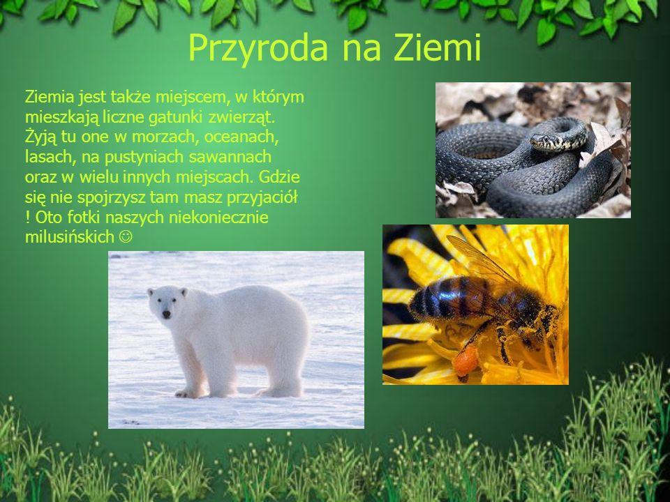 Przyroda na Ziemi Ziemia jest także miejscem, w którym mieszkają liczne gatunki zwierząt. Żyją tu one w morzach, oceanach, lasach, na pustyniach sawan