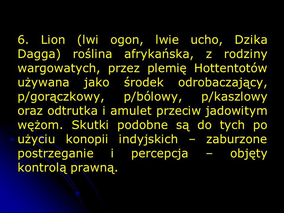 6. Lion (lwi ogon, lwie ucho, Dzika Dagga) roślina afrykańska, z rodziny wargowatych, przez plemię Hottentotów używana jako środek odrobaczający, p/go