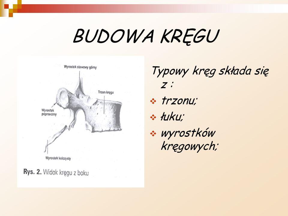 BUDOWA KRĘGU Typowy kręg składa się z : trzonu; łuku; wyrostków kręgowych;