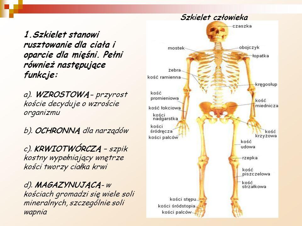 Szkielet człowieka 1.Szkielet stanowi rusztowanie dla ciała i oparcie dla mięśni. Pełni również następujące funkcje: a). WZROSTOWĄ- przyrost koście de