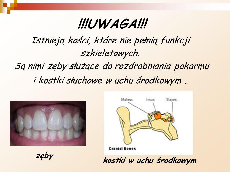 !!!UWAGA!!! Istnieją kości, które nie pełnią funkcji szkieletowych. Są nimi zęby służące do rozdrabniania pokarmu i kostki słuchowe w uchu środkowym.
