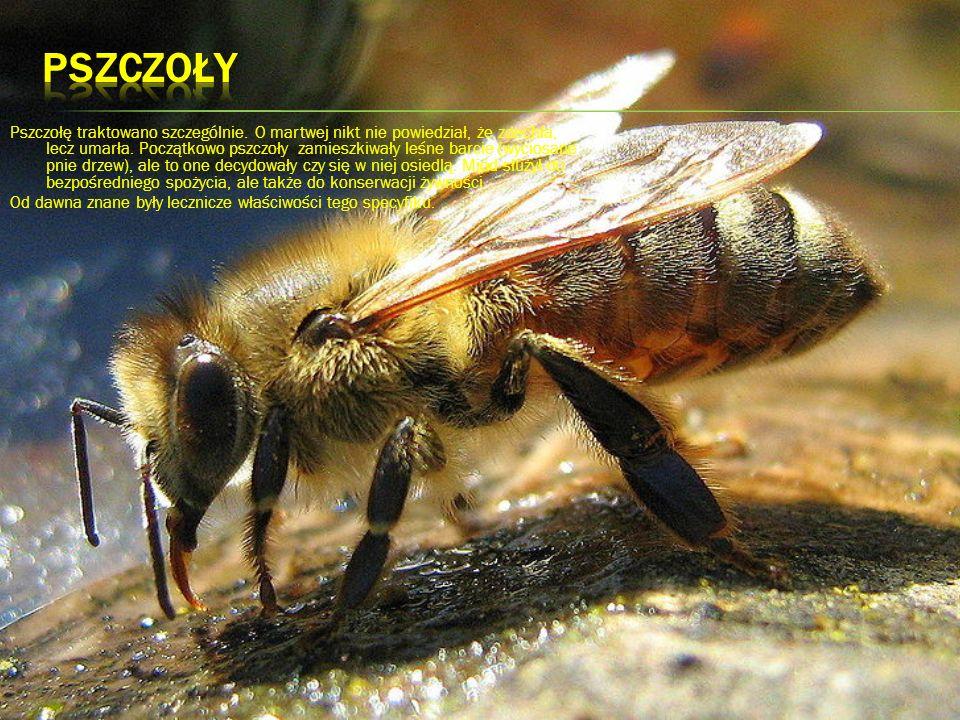 Pszczołę traktowano szczególnie. O martwej nikt nie powiedział, że zdechła, lecz umarła. Początkowo pszczoły zamieszkiwały leśne barcie (wyciosane pni
